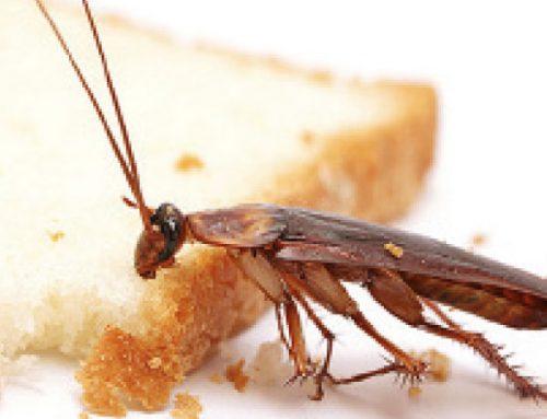 شركة مكافحة الرمة عجمان | 0543147776 | ابادة الحشرات